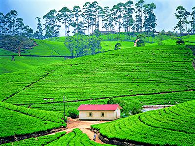Sri Lanka Thé